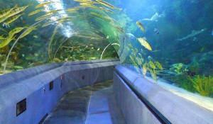 посещение на аквариум тюркуазу истанбул