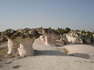 скални гъби